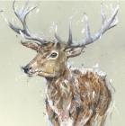 Stag - Card