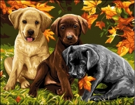 Royal Paris Tapestry/Needlepoint Canvas - Labrador Puppies
