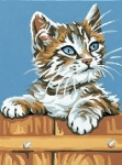 Royal Paris Starter Tapestry/Needlepoint Kit � Kitten on Fence